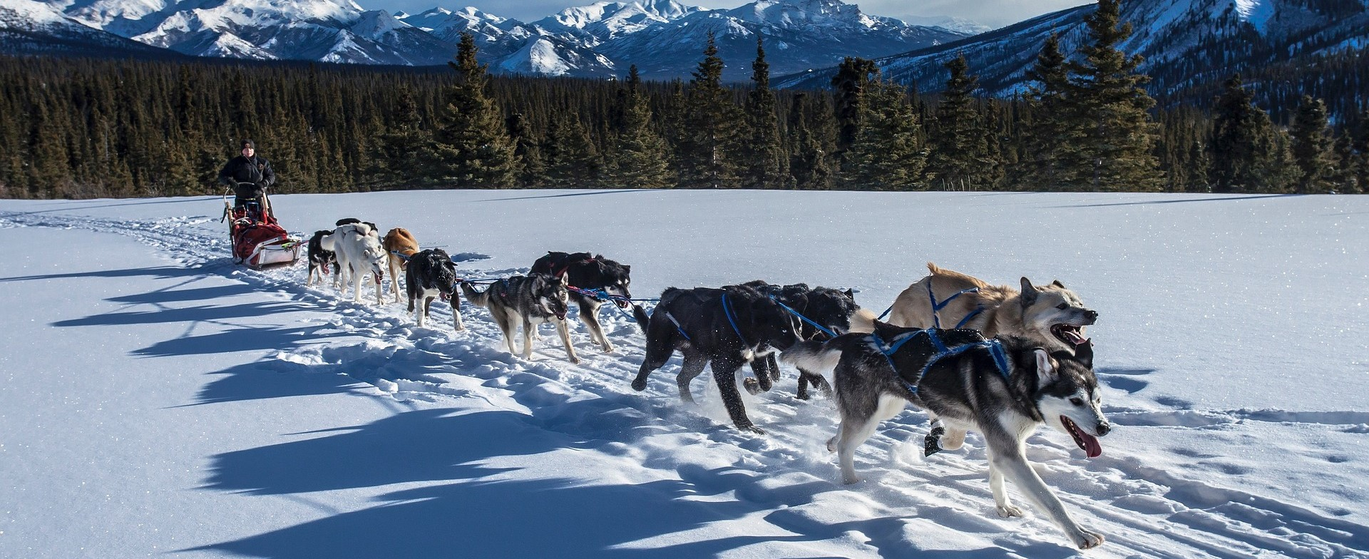 Dogsled Team in Alaska | Kids Car Donations