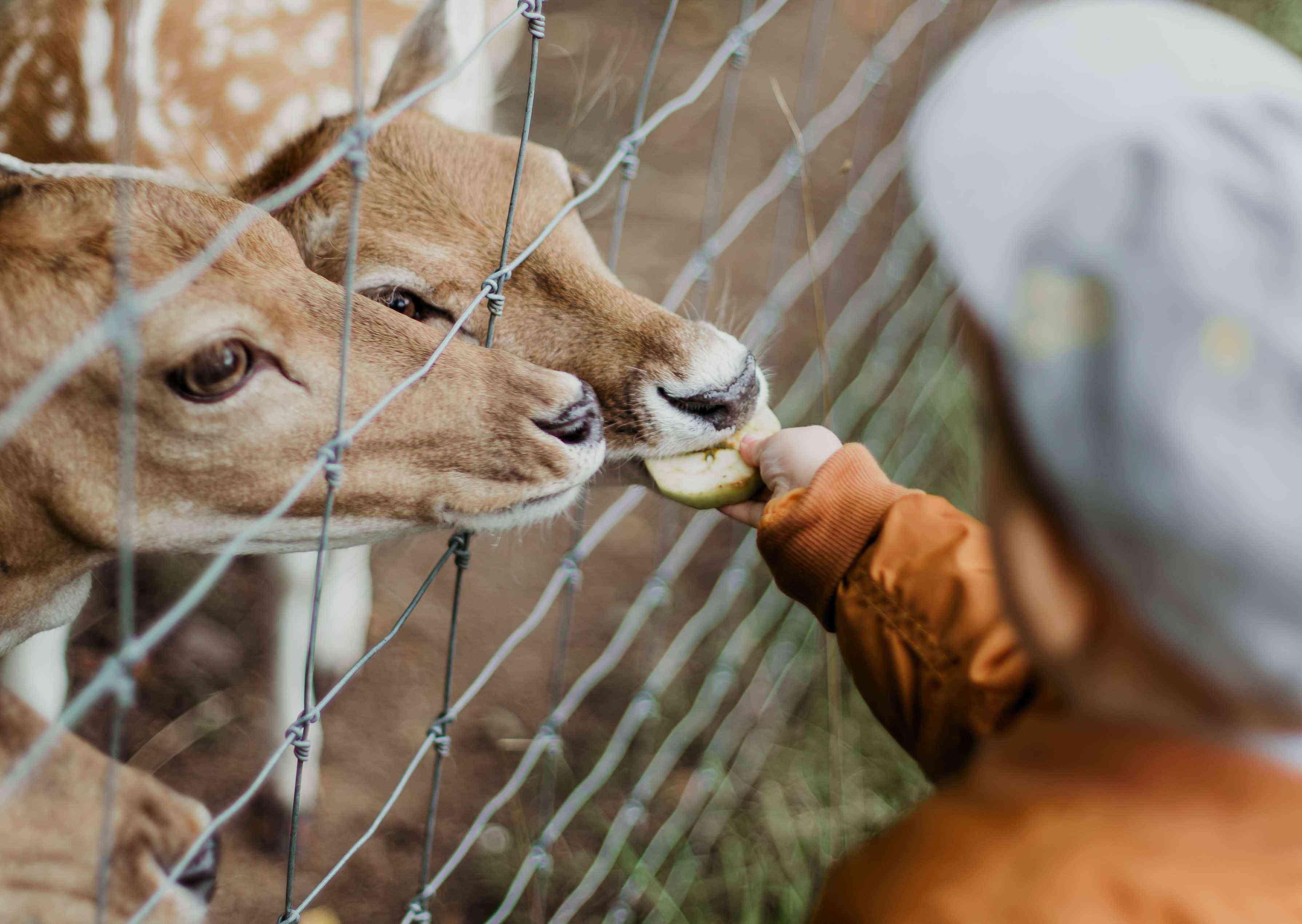 Kid Being Kind Feeding a Deer | Kids Car Donations