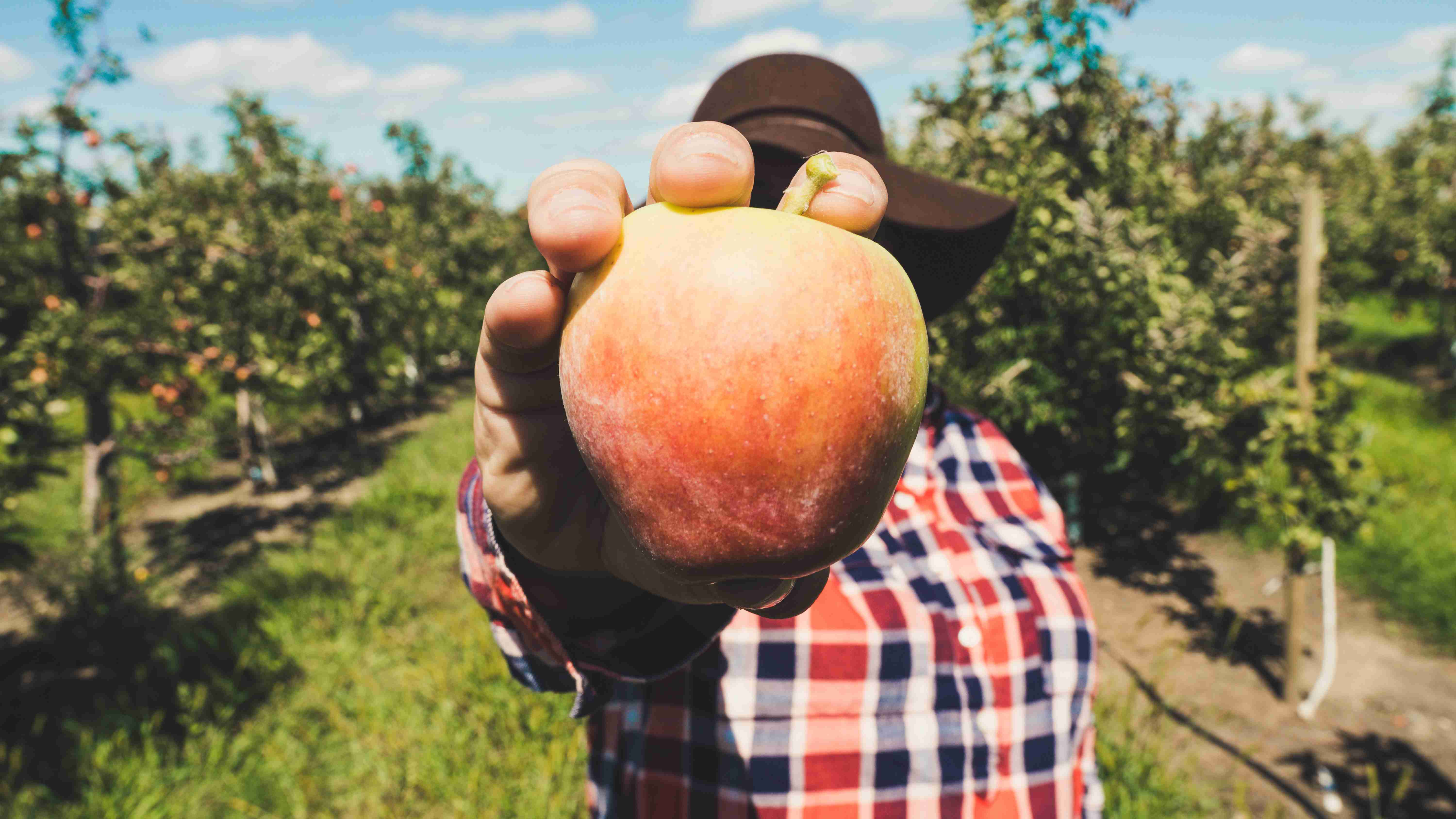 Apple Picking on Fall | Kids Car Donations