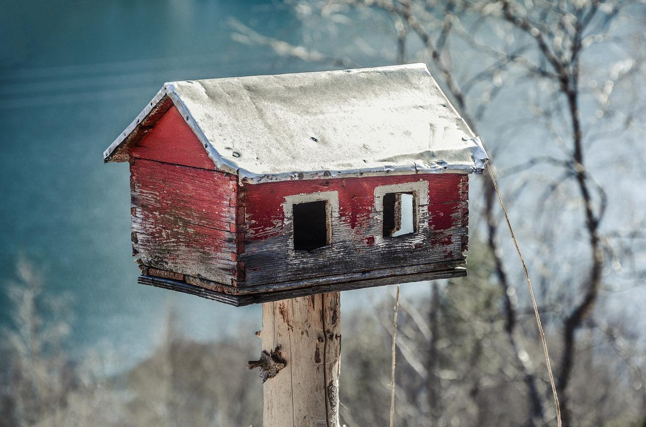 Backyard Birdhouse | Kids Car Donations