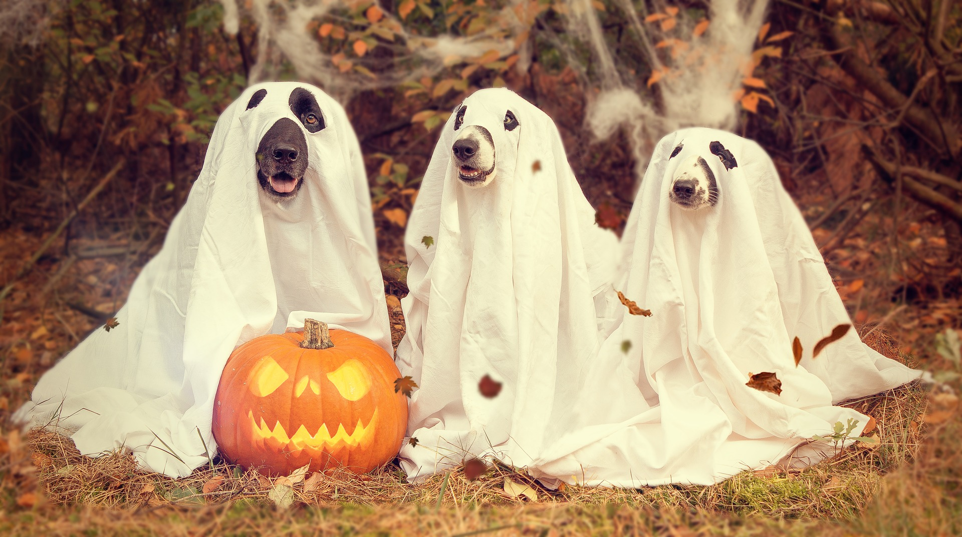 Halloween-Costumed Dogs | Kids Car Donations