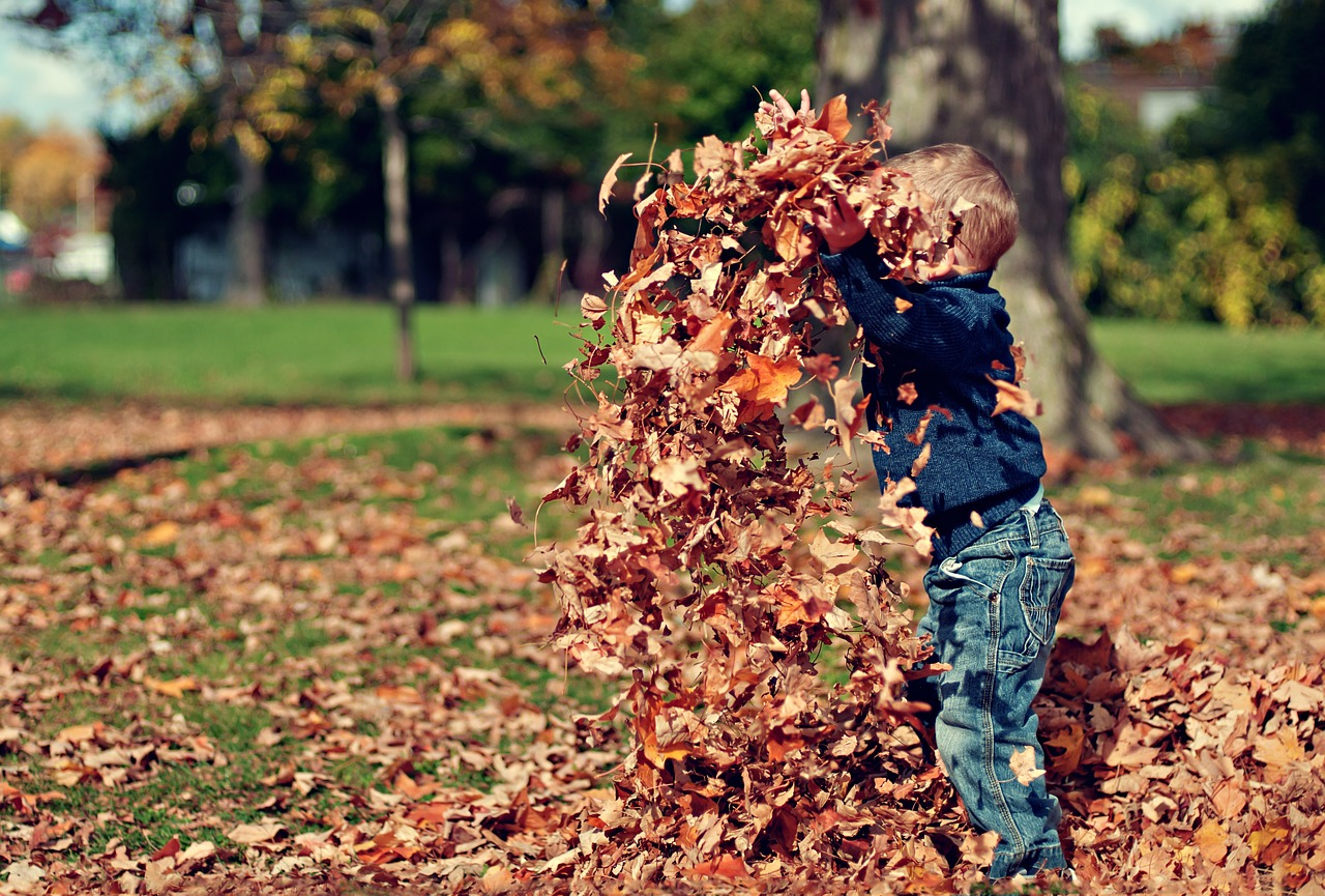 Little Boy Playing with Autumn Leaves | Kids Car Donations